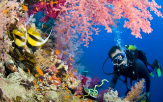 3 Tips to Scuba Dive Like an Expert
